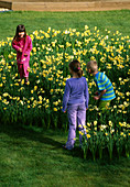HARRIET, Nancy AND ROBBIE PLAY IN THE Daffodil MAZE IN GRASS Made with NARCISSUS 'Yellow CHEERFULNESS'