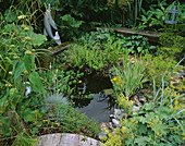Wildlife POND IN DAVID AND MARIE CHASE'S Garden, Hampshire