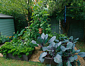 THE DECORATIVE CHILDRENS POTAGER with PARSLEY, CABBAGE, RUNNER Beans AND COURGETTES