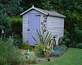 PAINTED WOODEN SHED SURROUNDED by FESTUCA GLAUCA AND A PHORMIUM. DAVID AND MARIE CHASE'S Garden, Hampshire