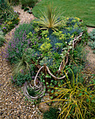 WICKERWORK BOAT with Rope FILLED with FESTUCA GLAUCA AND Cordyline IN DAVID AND MARIE CHASE'S Garden, Hampshire