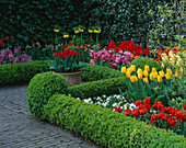 Box EDGED BEDS with Tulipa AND Fritillaria IMPERIALIS 'LUTEA' - Keukenhof GARDENS, Holland