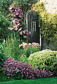 LAUNA SLATTERS Garden, OXFORDSHIRE: BORDER with PHUOPSIS STYLOSA, ALLIUM CHRISTOPHII, HEBE RAKAIENSIS, ORIENTAL POPPIES AND CLEMATIS 'COMTESSE De BOUCHAUD'