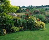 LAUNA SLATTERS Garden OXFORDSHIRE: Yellow AND Red BORDER with ROBINIA Frisia , HEMEROCALLIS, ALCHEMILLA MOLLIS, DAHLIA 'BISHOP of LLANDAF' , EUONYMUS 'Emerald N Gold'