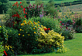 LAUNA SLATTERS Garden OXFORDSHIRE: Yellow AND Red BORDER with HEMEROCALLIS, ALCHEMILLA MOLLIS, DAHLIA 'BISHOP of LLANDAF' , EUONYMUS 'Emerald N Gold' AND BUDDLEJA