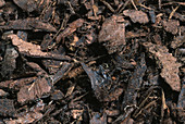 BARK CHIPPINGS (Not TO BE USED FOR PACKAGING)