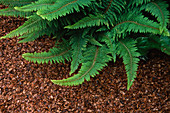 FERN MULCHED with Coconut (Not TO BE USED FOR PACKAGING)