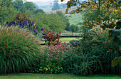PETTIFERS Garden, OXFORDSHIRE: AUTUMN BORDER PLANTED with MISCANTHUS SINENSIS 'YAKUSHIMA DWARF', ACONITUM CARMICHAELII 'Arennndsii' AND SORBUS 'Joseph Rock'