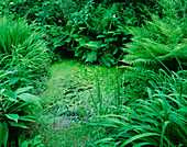 Designer: JANE RUSSELL, MILLE FLEURS, Guernsey: THE UPPER POND IN THE WOODLAND WTH APONOGETON DISTACHYOS AND FERNS