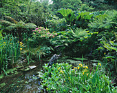 Designer: JANE RUSSELL, MILLE FLEURS, Guernsey: POND IN THE WOODLAND WTH A HERON by JASON LE PROVOST SURROUNDED by Dicksonia ANTARCTICA, GUNNERA, CYPERUS AND Iris