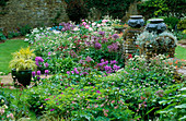 PETTIFERS, OXFORDSHIRE: BORDER by THE HOUSE with PAEONIA 'Bowl of BEAUTY', ALLIUM ALBOPILOSUM, STACHYS MACRANTHA 'SUPERBA' AND LEAD URNS