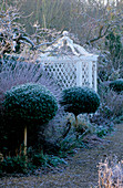 West Green HOUSE Garden, Hampshire: CLIPPED Box LOLLIPOPS IN Front of BORDER AND White SEAT IN THE WALLED Garden IN Winter IN Frost