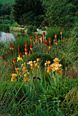 Lady Farm, Somerset: THE Steppe AREA with KNIPHOFIA, Iris 'Butterscotch Kiss' AND Lake IN BACKGROUND