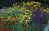 CHELSEA 2004: LIFE Garden by JANE Hudson AND ERIK De MAEIJER: Hot PLANTING with Achillea 'Moonshine', HEMEROCALLIS LILIOASPHODELUS, Salvia 'MAINACHT' AND GEUM COCCINEUM