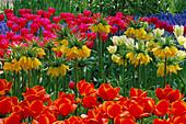 Keukenhof GARDENS, Holland: Tulipa AND Fritillaria IMPERIALIS 'LUTEA'