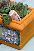 Designer: Clare MATTHEWS: TERRACOTTA Pot PLANTED with Sempervivum with SHELL LABEL