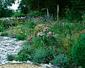 Designer Clare MATTHEWS - Devon Garden - THE WALLED Garden with WOODEN BENCH, STIPA TENUISSIMA, SLATE, MONARDA 'BEAUTY of COBHAM', Scabiousa COLUMBARIA 'NANA', Achillea 'LOVE Parade