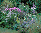 Pastel BORDER with PLANTED with Phlox, Achillea, SAGE AND ALLIUM. Designer : DAVID CHASE