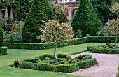 THE ABBEY HOUSE, Wiltshire: CLIPPED HOLLY TREE AND CLIPPED Box AND BERBERIS On THE Parterre