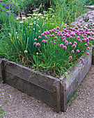 THE ABBEY HOUSE, Wiltshire: RAISED WOODEN BED IN THE Herb Garden with FLOWERING CHIVES