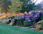 AUTUMN BORDER with SWAN SCULPTURE, STIPA TENUISSIMA, BETULA ERMANII AND ASTERS. Designer: JOHN MASSEY