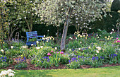 Blue PAINTED BENCH at ST. MICHAEL'S HOUSE, KENT. PYRUS SALICIFOLIA PENDULA, Muscari, White TULIPS