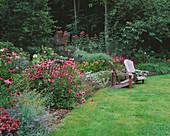 SWEEPING BORDER Beside WOODLAND with Echinacea, Nepeta AND EUPATORIUM. Designer: DUNCAN HEATHER, OXFORDSHIRE
