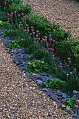 Box HEDGING, GRAVEL, SLATE AND THRIFT IN THE PARTERRE. PARSONAGE, OMBERSLEY, WORCESTERSHIRE