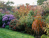 BORDER with MISCANTHUS 'Ghana', DAHLIA COCCINEA, Aster 'LITTLE CARLOW'. MARCHANTS Hardy PLANTS, Sussex