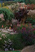 PENNISETUM SETACEUM, Agastache RUGOSA HYBRID. Canna 'MYSTIQUE', MISCANTHUS 'Kaskade', SAMBUCUS 'Black BEAUTY', PENSTEMON. MARCHANTS Hardy PLANTS, Sussex