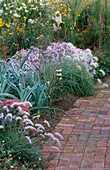BRICK PATH AND BORDER PLANTED with PENNISETUM ORIENTALE, PENNISETUM VILLOSUM, LEEKS AND Aster PYRENAEUS 'LUTETIA'. MARCHANTS Hardy PLANTS, Sussex