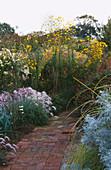 BRICK PATH AND BORDER with PENNISETUM VILLOSUM, HELIANTHUS SALICIFOLIUS, Artemisia ARBORESCENS, LEUCANTHEMELLA SEROTINA, PERSICARIA 'Taurus', MARCHANTS Hardy PLANTS, Sussex