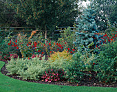 AUTUMN BORDER with Fuchsia, ABIES CONCOLOR AND DAHLIA 'BISHOP of LLANDAFF'. Designer: JOHN MASSEY