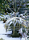 PHORMIUM IN Container IN SNOW at WOODCHIPPINGS, NORTHAMPTONSHIRE