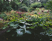 MAYROYD MILL HOUSE, Yorkshire: DESIGNERS: RICHARD EASTON AND Steve MACKAY - WOODLAND SHADE PLANTING with Rodgersia, ANGELICA GIGAS, ASTILBE CHINENSIS Var TACQUETI PURPURLANZE
