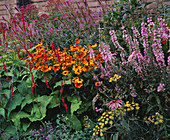MAYROYD MILL HOUSE, Yorkshire: DESIGNERS: RICHARD EASTON AND Steve MACKAY - BORDER Beside THE MILL with HELENIUM SAHINS EARLY FLOWERER
