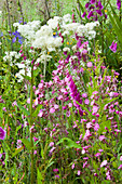 Clare MATTHEWS Devon Garden: WILDFLOWER MEADOW with FOXGLOVES AND Red CAMPION