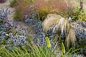 Lady Farm, SOMERSET. GRAVEL PLANTING of ERYNGIUM, Green KNIPHOFIA AND GRASSES