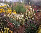 MISTY AUTUMN MORNING, MARCHANTS Hardy PLANTS, Sussex - PENNISETUM 'Black BEAUTY', PENNISETUM VILLOSUM, HELIANTHUS SALICIFOLIUS, Verbascum, RUDBECKIA SUBTOMENTOSA