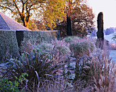 PETTIFERS, OXFORDSHIRE: YEW TOPIARY HEDGE AND FROSTY BORDER with PHORMIUM