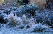 PETTIFERS, OXFORDSHIRE: FROSTY BORDER with STIPA TENUISSIMA, CALAMAGROSTIS 'Karl FOERSTER' AND Agapanthus