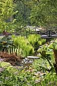 THE BOG Garden at THE RHS Garden, ROSEMOOR, DEVON. GUNNERA MANICATA, RHEUM PALMATUM ATROSANGUINEUM AND MATTEUCCIA STRUTHIOPTERIS