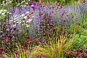 CHELSEA FLOWER Show 2006: DAILY TELEGRAPH Garden DESIGNED by Tom STUART-Smith: Nepeta 'WALKERS LOW', ORLAYA GRANDIFLORA, STIPA ARUNDINACEA, KNAUTIA, ASTRANTIA 'Claret'
