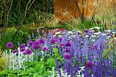CHELSEA FLOWER Show 2006: DAILY TELEGRAPH Garden DESIGNED by Tom STUART-Smith: CORTEN STEEL WALL, ALLIUM 'Purple Sensation', ORLAYA GRANDIFLORA, Salvia MAINACHT, Nepeta WALKERS LOW