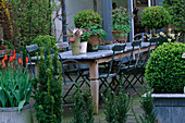 LISETTE PLEASANCE Garden, London:VIEW TO CONSERVATORY with DECKED TERRACE, LEAD TABLE AND CHAIRS