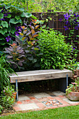 KATHY TAYLORS Garden, London: A PLACE TO SIT - WOODEN SEAT / BENCH SURROUNDED by COTINUS 'Grace'