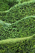 VEDDW HOUSE Garden, GWENT, Wales: DESIGNERS ANNE WAREHAM AND CHARLES HAWES - CLIPPED YEW HEDGES IN THE Pool Garden