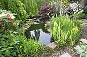 HUNMANBY Grange, Yorkshire: POND PLANTING with GRAVEL PLANTING with Iris PSEUDACORUS, TREE PEONY, OLEARIA SCILLONIENSIS, BERBERIS AND PHORMIUM