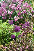 HUNMANBY Grange, Yorkshire:PLANT COMBINATION - WEIGELA Florida 'Purpurea', ALLIUM 'Purple Sensation & Pink LILAC (SYRINGA)