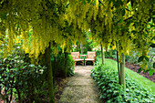 HUNMANBY Grange, YORKSHIRE. A PLACE TO SIT. PATH LEADING TO SEATING AREA IN LABURNUM AVENUE / Tunnel UNDERPLANTED with ALCHEMILLA MOLLIS (Lady'S MANTLE)